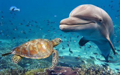 An Ocean of Adventures